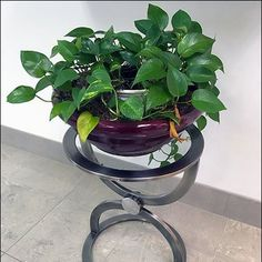 Retail Plant Circle Predilections Retail Merchandising, All Plants, Greenery, Cool Designs, Display, Outdoor Decor, Retail, Billboard