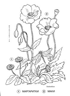 Design Patterns Embroidery Hand Botanical Flowers Watercolor Art Poppies Coloring Pages Needlework