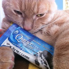 For those of you who don't know, this is my bae !  Ollie and I have the same feelings when it comes to the last #quest bar... WE WANNA EAT IT  This cat actually shed a tear when I gave this to him . #questlove  @questnutrition  @questcreator #cheatclean