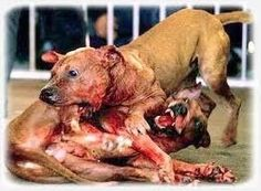 Let's stop fighting and trafficking of dogs!