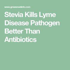 Stevia Kills Lyme Disease Pathogen Better Than Antibiotics