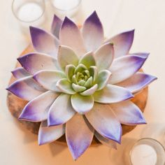 NY Cityscape Wedding - Inspired By This Succulent Gardening, Planting Succulents, Planting Flowers, Succulent Plants, Cactus Plante, Pot Plante, Purple Succulents, Succulent Centerpieces, Echeveria