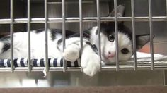 Most of the cats abandoned outside Marin Humane Society have been adopted