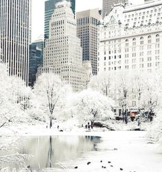 Ny Covered In Snow