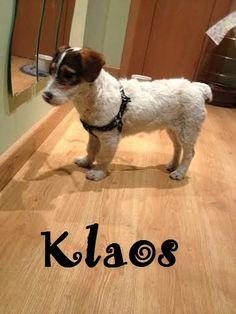 11 Ideas De Perros En Adopción Perros En Adopcion Adopcion Perros