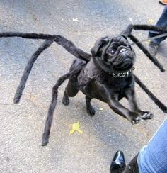 me and lenny are so doing this to moki this year for halloween!