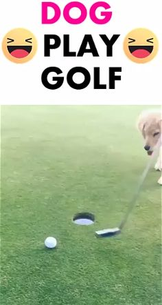 very funny dog puppy playing golf , spread the love if you puppy lovers , click visit to see more dogs topics #dogs #funny #pet #pets #lovelydog #funnypictures #cutepuppy #funnyvideos puppy beautiful . #funnyofpuppy