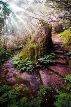 Fascinating Photographs of Forest Paths to another world (26)