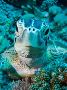 Beautiful #Turtle #Photography ♥´¯`•.¸¸.☆◉★ please like our page on http://facebook.com/southfloridah2o for stuff like this  ★◉☆ .¸¸.•´¯`♥