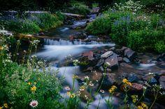 https://flic.kr/p/w2JT6P   Melody Creek (Explore 7/16/15)   Spray Park - Mount Rainier