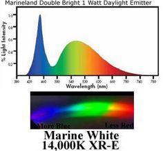 Aquarium Lighting Information Guide