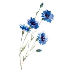 What is Your Painting Style? How do you find your own painting style? What is your painting style? Illustration Blume, Watercolor Illustration, Illustration Flower, Aesthetic Drawing, Flower Aesthetic, Watercolor Plants, Watercolour Painting, Watercolor Tattoos, Watercolor Flower Painting