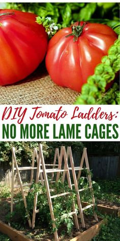 Learn how to make a DIY tomato ladders that would definitely last long for your garden.