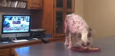 Dog Steals Food Off Counter