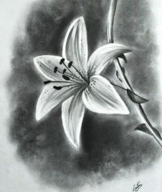 Realistic flower drawing tutorial and beautiful flower drawings and realistic color pencil drawings 3d Pencil Sketches, Pencil Drawings Of Flowers, Flower Sketches, Pencil Art Drawings, Drawing Sketches, Drawing Flowers, Drawing Ideas, Flower Sketch Pencil, Drawing Tips