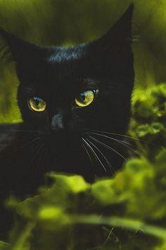 Green eyes, green grass
