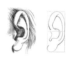 Sombrear oreja 2