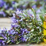 Img Salvia, Essential Oils, Herbs, Chia, Restore, Beauty, Instagram, Homemade Recipe, Face Care