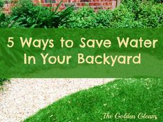 Backyard Water Conservation Tips