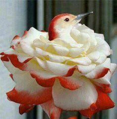 bird......rose