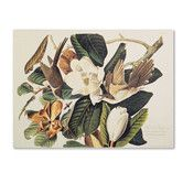 """Found it at Wayfair - """"Black-Billed Cuckoo"""" by John James Audubon Painting Print on Wrapped Canvas"""