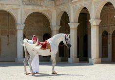 Fotos de Dana Tise publicadas en I LOVE EGYPT FOREVER Bahabeek ya Maser