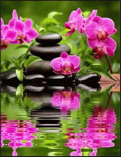 By Artist Unknown. By Artist Unknown. Beautiful Gif, Beautiful Pictures, Zen Pictures, Exotic Flowers, Beautiful Flowers, Photo Zen, Orquideas Cymbidium, Zen Meditation, Water Reflections