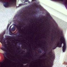Edgar the Pug pewdiepie | Комментарии: 0