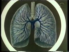 Bio-Bits 50 Het hart als pomp