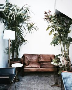 Leather couch, neutral living room & large plants