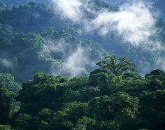 The biodiversity Monteverde Costa Rica can be explored at Monteverde Cloud Forest Reserve, Selvatura, Reserva Sendero Tranquilo, and Santa Elena reserves. Cloud Forest Costa Rica, Continental Divide, Monteverde, South America Travel, Best Places To Travel, What A Wonderful World, Hawaii Travel, Where To Go, Natural