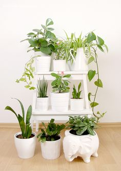 Urban Jungle Bloggers: My Plant Gang by @aentschie