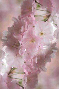 ** Pink & white
