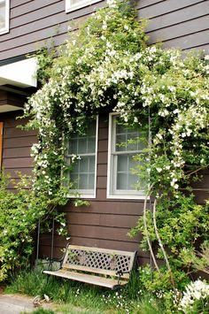 窓辺を飾る白モッコウ。こんなベンチに座ってぼーっとしてみたい・・・。