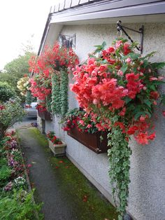 Hanging-baskets-fed-with-Liquid-Gold.jpg (3240×4320)