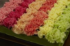 How to Create a Pave' of Carnations in a Tray. Fun way to use carnations for centerpieces.