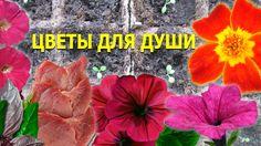 Цветы для души 🌺 Любимое хобби.