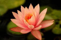 Water Lily~Explored! by j man ツ, via Flickr