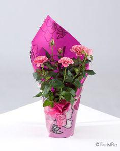 Rose Plant (Mini)