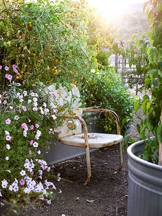 We'd happily volunteer to take a seat in this lovely garden filled with portulaca, sage, cherry tomatoes, Padron peppers, parsley and more. #gardening #summer