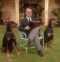 Zeus and Apollo Black Doberman dogs from Magnum PI Higgins Magnum Pi, John Hillerman, Doberman Love, Black Doberman, Doberman Pinscher Dog, Tom Selleck, Cultura Pop, Classic Tv, Beautiful Dogs