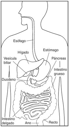 Digestive System Diagram for Kids & Digestion Facts