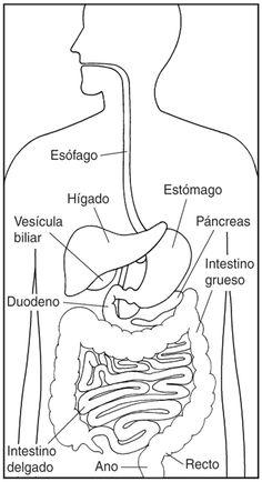 Diarrea - iffgd.org
