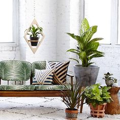 Our jungalow hanging planter as seen in @LonnyMag--because you should really just put plants everywhere. (Designed by @justinablakeney crafted my @Wearemfeo available at @westelm ) #JungalowStyle