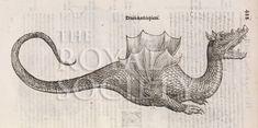 image aldrovandi, u_serpentum et draconum_1640_p422