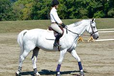 Funny Horses, Cute Horses, Pretty Horses, Cute Horse Pictures, Dapple Grey Horses, Hunter Horse, Horse Magazine, Riding Lessons, English Riding