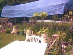 Depois de levantada duas vezes a estufa da horta,       que era apenas de bambu, agora recebeu um reforço     ...