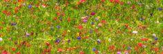 zomer... | Natuur foto van Mauriliers | Zoom.nl