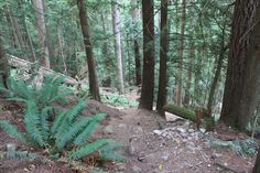 The Baden Powell trail from Lynn Canyon to the base of Grouse Mountain passes alongside the steep forest trails of North Vancouver.