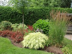 Plate-bande semi-ombragée - San Son Vert Outdoor Plants, Outdoor Gardens, Landscape Design, Garden Design, Garden Privacy, Porch Garden, Ornamental Grasses, Back Gardens, Front Yard Landscaping